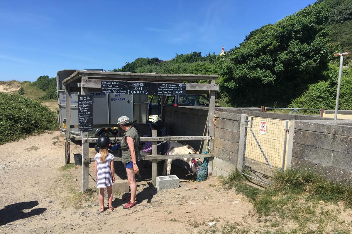 Donkeys at Aberdovey beach
