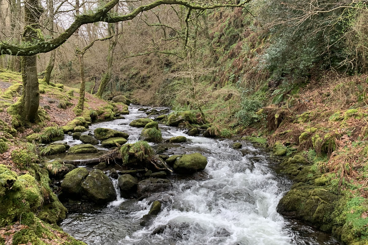 Stream at Dolgoch Falls